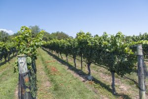 Labor Day Wine Tour of CT