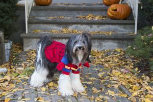Sophie gets her Spidey on for Halloween